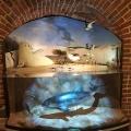 Doposażenie Działu Przyrody Muzeum im. Jacka Malczewskiego w Radomiu w dioramy